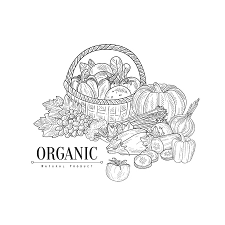 Organic Farm Products Still Life Hand Drawn Realistic Sketch. Hand Drawn Detailed Contour Illustration On White Background. Illustration