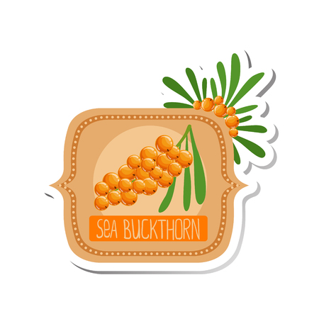 marmalade: Sea Buckthorn Bright Color Jam Label Sticker Template In Square FrameHomemade Garden Fruit Sweet Marmalade Vector Isolated Illustration.