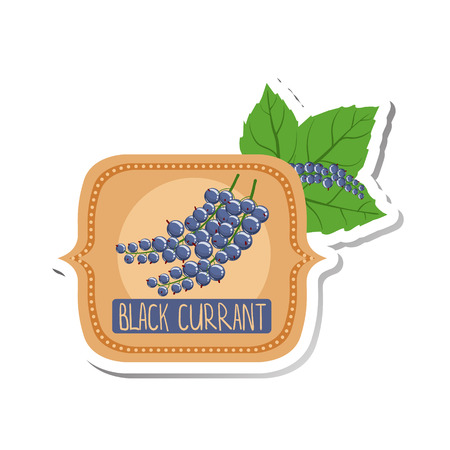 marmalade: Black Currant Bright Color Jam Label Sticker Template In Square FrameHomemade Garden Fruit Sweet Marmalade Vector Isolated Illustration.