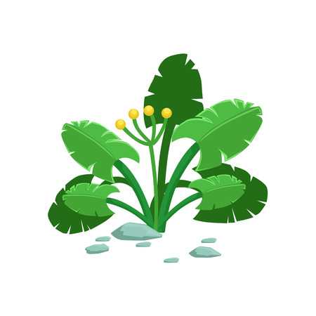 Broad-Leaved Tropical Jungle Plant Natural Landscape Design Element, Part Of Scenery In Nature Landscaping Constructor. Detailed Cartoon Vector Objects For Land Surface Constructing. Illustration