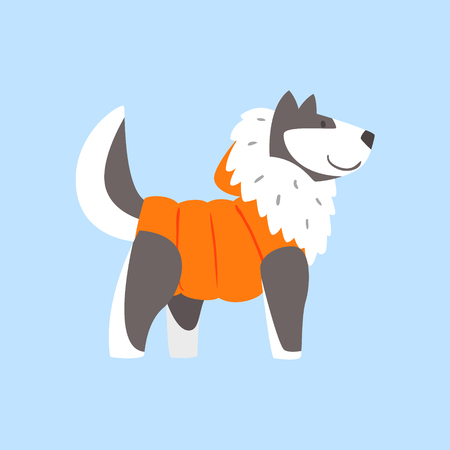 dressed: Husky Dog In Padded Coat, Arctic Animal Dressed In Winter Human Clothes Cartoon Character