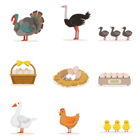 Oiseaux de ferme cultivés pour la viande et pour pondre des oeufs, l'agriculture biologique ensemble d'Illustrations vectorielles avec des animaux Banque d'images - 72534075
