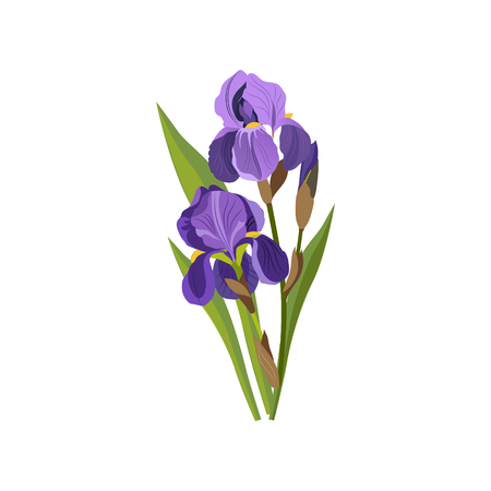 Iris Hand Drawn Realistic Illustration