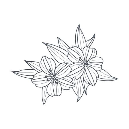 Dibujo Blanco Y Negro De La Flor De Jazmín Para Colorear