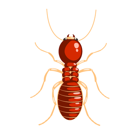 nuisance: Termite insect colorful cartoon character