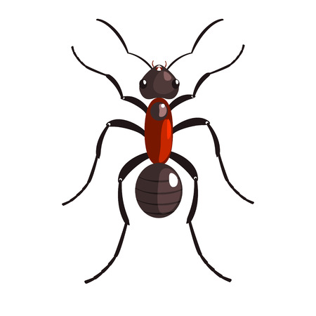 Noir ant insecte coloré personnage de dessin animé coloré Banque d'images - 75544237