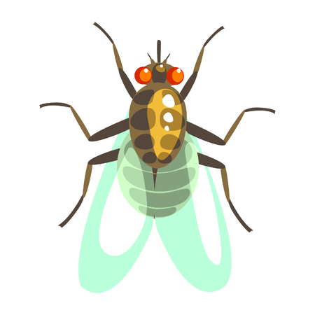Fly insect colorful cartoon character