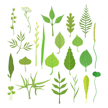 plantain herb: Fresh green leaves from trees, shrubs and grass set for label design. Nature and ecology, cartoon detailed colorful illustration