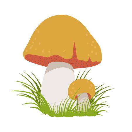 Boletus edulis, edible forest mushrooms. Colorful cartoon illustration