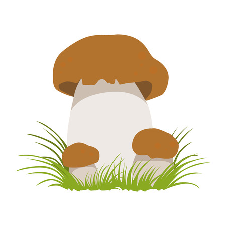 Boletus, autumn cep, edible forest mushrooms. Colorful cartoon illustration