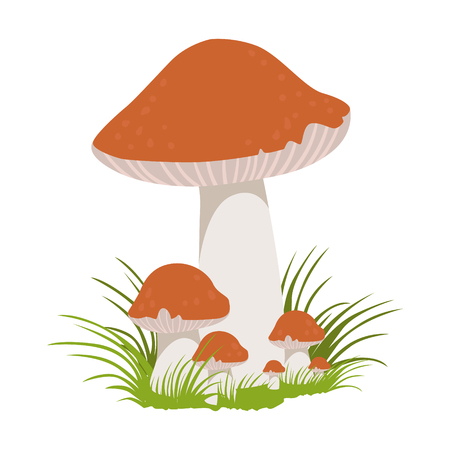 Lactarius quietus, edible forest mushrooms. Colorful cartoon illustration