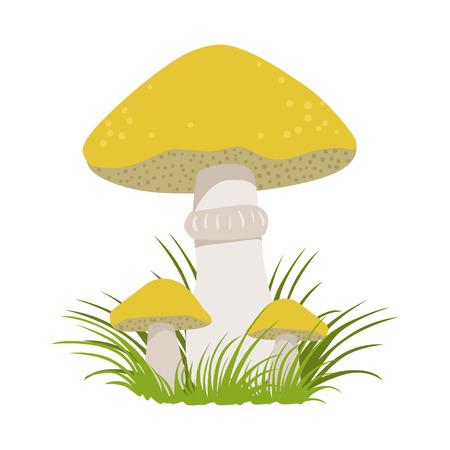Slippery jack, suillus luteus, edible forest mushrooms. Colorful cartoon illustration