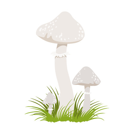 Amanita phalloides, poisonous mushrooms. Colorful cartoon illustration