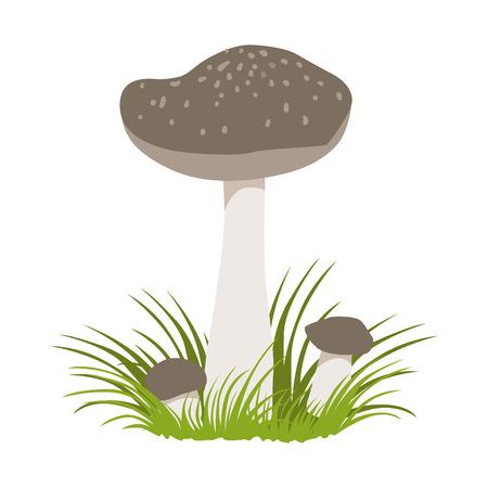 Tricholoma portentosum forest mushrooms. Colorful cartoon illustration Illustration