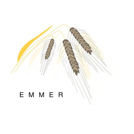 Emmer oor, Infographic illustratie met realistische Cereal Crop Plant en de naam ervan