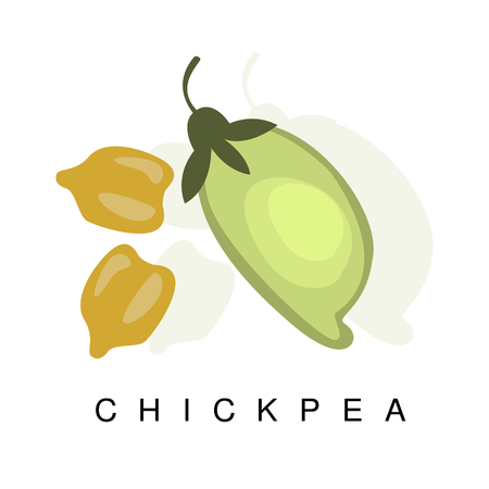 Chickpea Pod, Infographic Illustration With Realistic Pod-Bearing Legumes Plant And Its Name