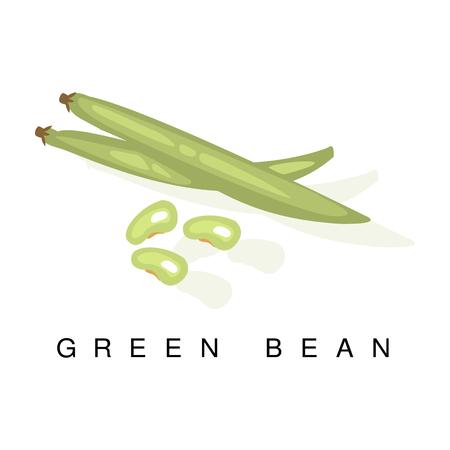 Gousse de haricot vert, Illustration infographique avec usine de légumineuses Pod-Bearing réaliste et son nom