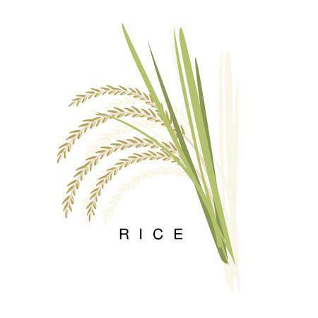 Oreille De Riz, Illustration Infographique Avec Une Plante De Céréales Réaliste Et Son Nom Banque d'images - 75948267