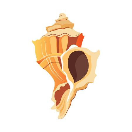 Rapana shell. An empty shell of a sea mollusk. Colorful cartoon illustration