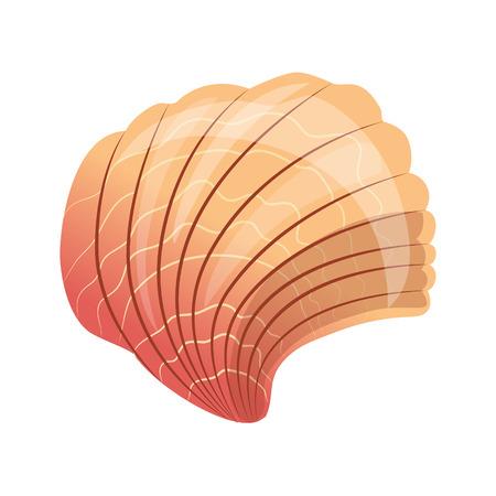 noix saint jacques: Scallop seashell, une coquille vide d'un mollusque de mer. Illustration dessin animée colorée Illustration