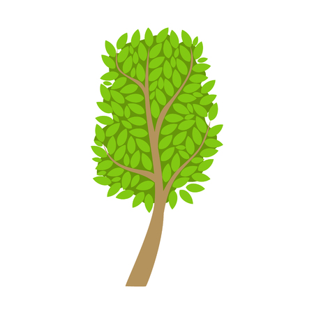 Tree with an oval crown and green leaves, element of a landscape. Colorful cartoon vector Illustration