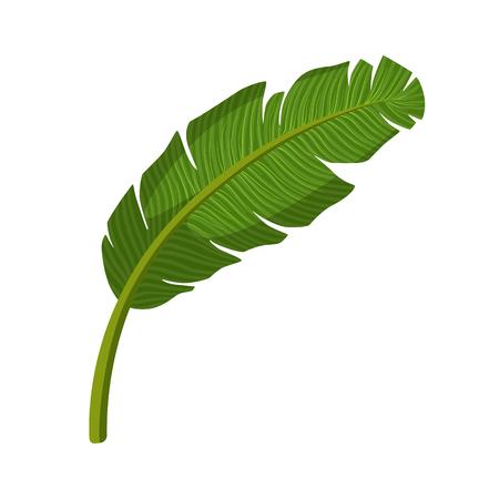 Tropical palm leaf. Colorful cartoon vector Illustration Illustration
