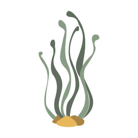 Seaweed Attached To The Bottom, Part Of Mediterranean Sea Marine Animals And Reef Life Illustrations Series. Aquarium Element Isolated Stylized Icon, Underwater Inhabitant Artistic Sticker.