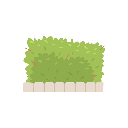 Green shrub fence, urban infrastructure element vector Illustration