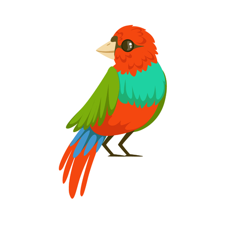 Colorful tropical bird vector Illustration isolated on a white background