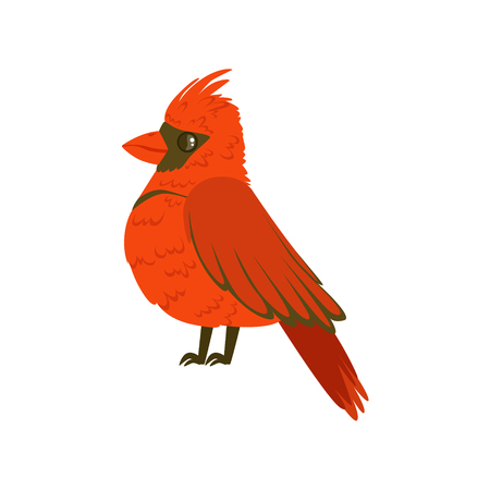 Small bright red tropical bird colorful vector Illustration isolated on a white background