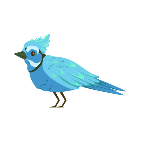 Beautiful blue bird colorful vector Illustration isolated on a white background