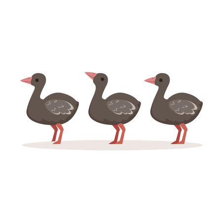 Three cute nestlings of ostrich standing one after another vector Illustration