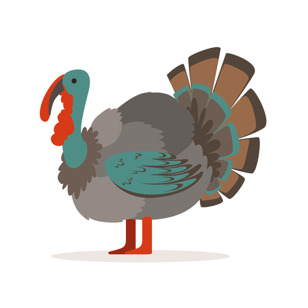 Turkey bird, poultry farming vector Illustration