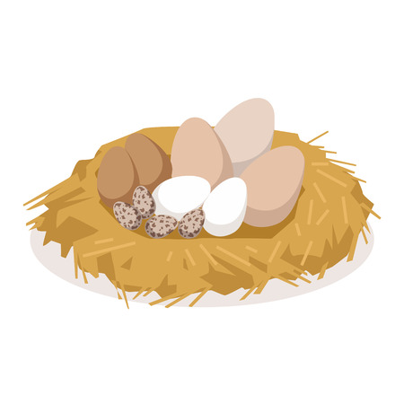 Nest with eggs of different birds, poultry breeding vector Illustration