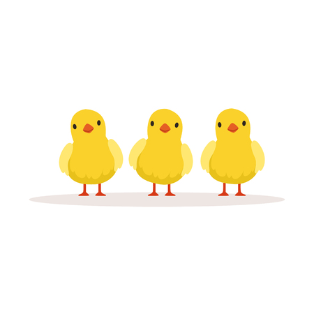 Three cute chickens vector Illustration isolated on a white background
