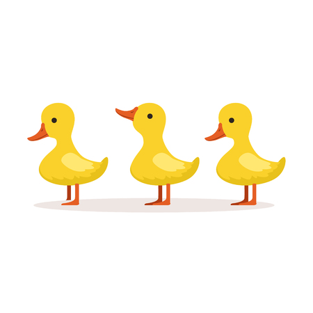 Three cute cartoon ducklings characters standing one after another vector Illustration Reklamní fotografie - 80508958