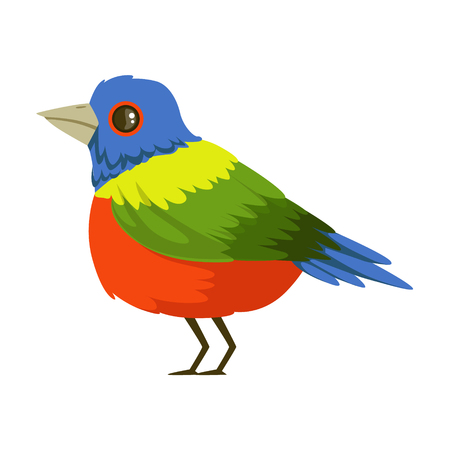 Colorful tropical bird vector Illustration Illustration