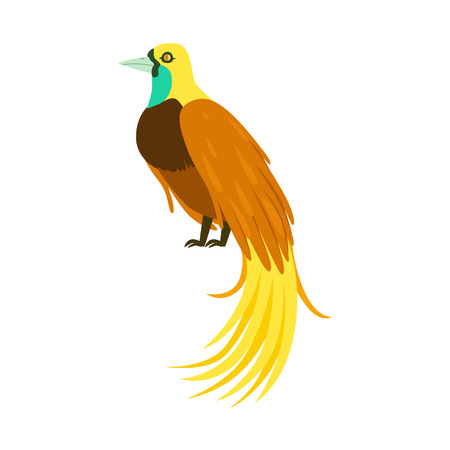 Tropical bird with long feathers colorful vector Illustration Illustration