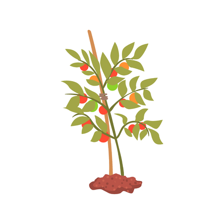 Young tree plant in the ground cartoon vector Illustration