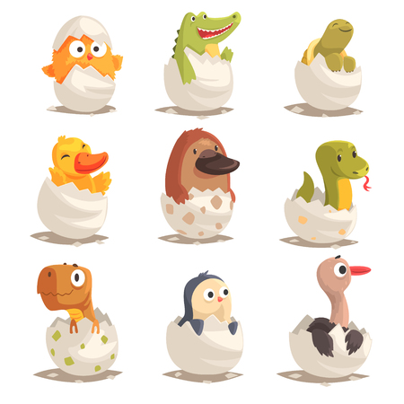 Chicks and reptiles hatch from eggs set, unborn animals vector Illustrations