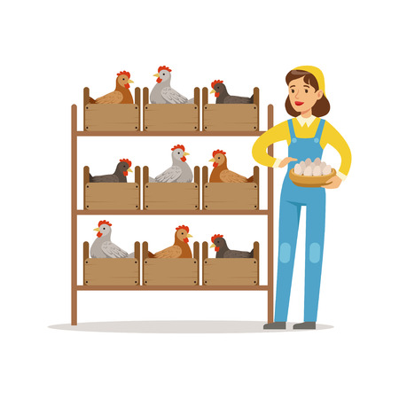 Farmer woman caring for chickens, poultry breeding vector Illustration
