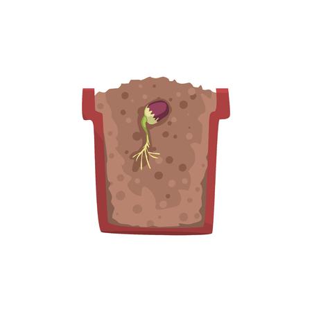 Seme di un fagiolo che germina in un vaso con suolo a terra, fase di crescita, vaso in una sezione trasversale Illustrazione vettoriale
