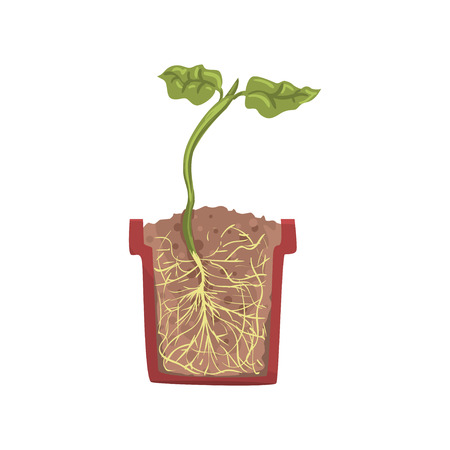 Green plant growing in a pot with ground soil, stage of growth, pot in a cross section vector Illustration