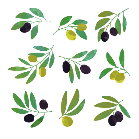 Olive tree branches set of colorful vector Illustrations