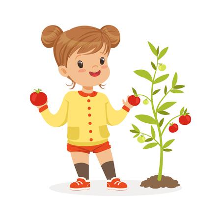 Douce petite fille, cueillette des tomates dans le jardin, vecteur alimentaire coloré concept de la nourriture saine pour enfants Illustration sur fond blanc Vecteurs