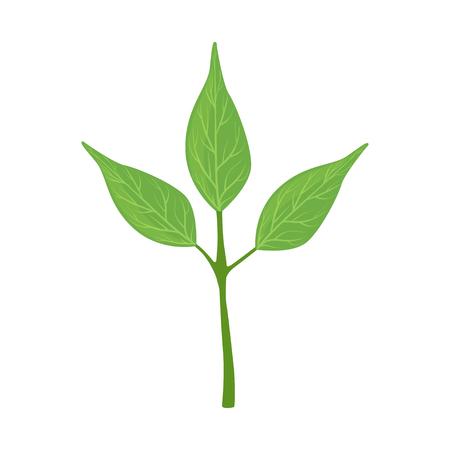 Green tree leaves vector Illustration on a white background Illustration