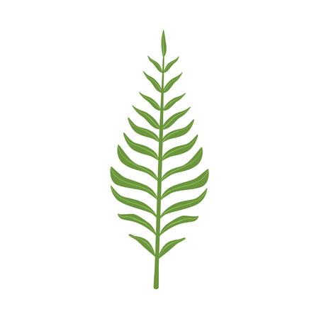 Pinnatisect green leaf vector Illustration on a white background Illustration