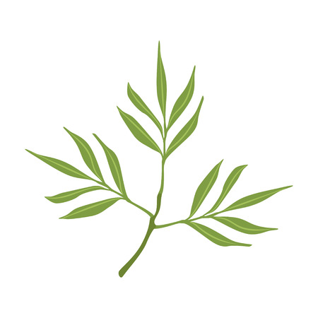 Willow tree green branch vector Illustration on a white background
