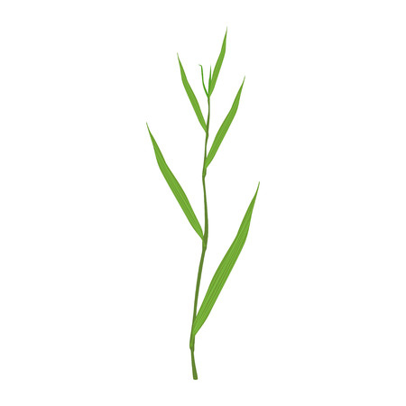 Sedge green grass vector Illustration on a white background