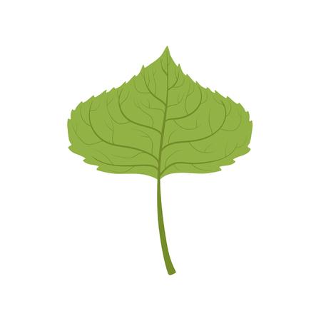 Aspen boom groen blad vector illustratie op een witte achtergrond